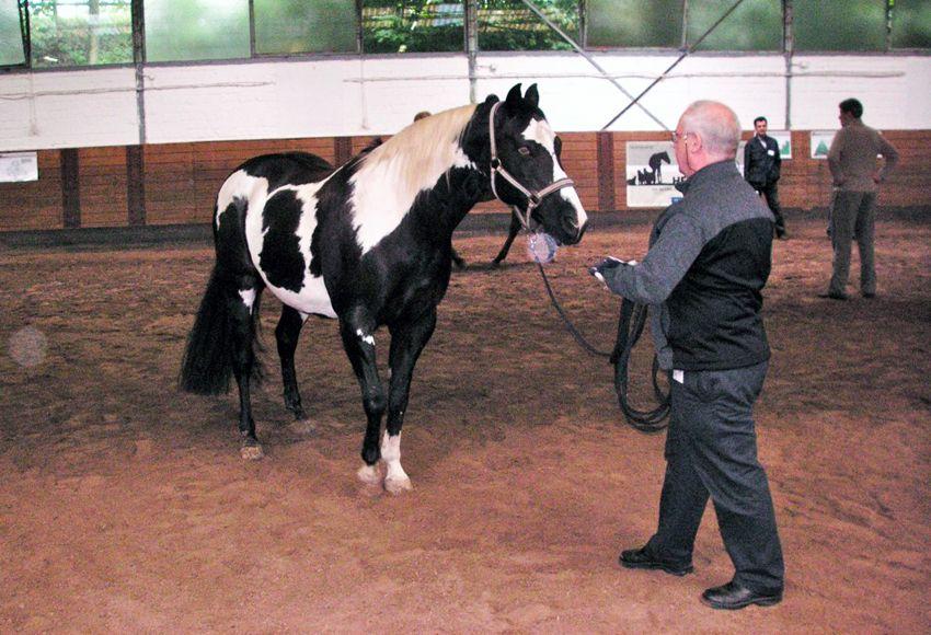 EINMALIGE VERWENDUNG manager-lounge: Führungskräftetraining mit Pferden