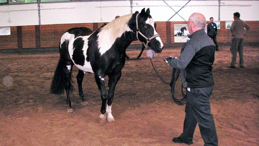 """Pferde als Trainer von Führungskräften: Statt Frontalunterricht die Konfrontation mit dem Pferd - das Prinzip """"Herdenchef"""""""