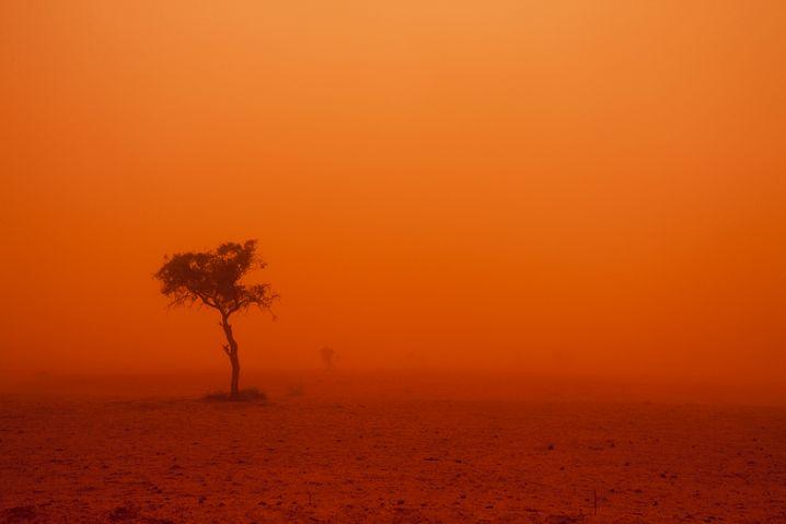 Sandsturm in Australien: Die AfD sieht im Klimawandel eine Verschwörung