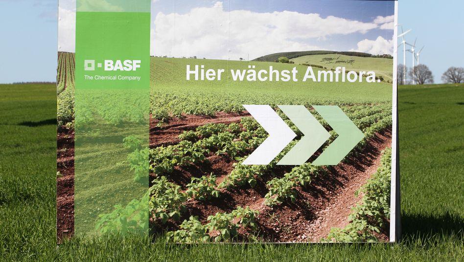 Genkartoffel Amflora: Anbau und Vertrieb sind in der EU verboten, entschied jetzt der Europäische Gerichtshof