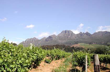 Herausragende Weine vom Kap: Südafrikas Weingebiet