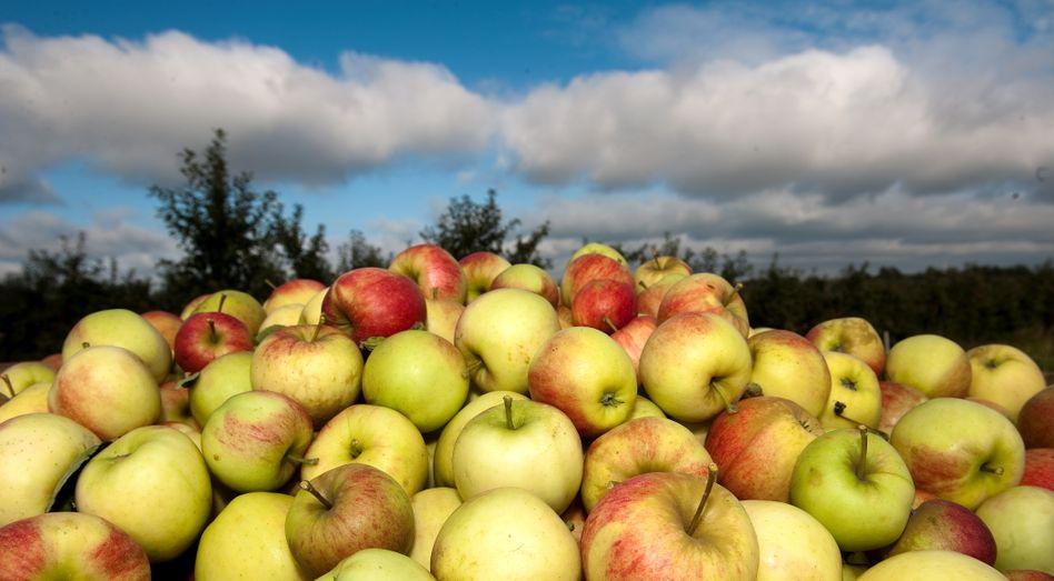 Apfelplantage im Alten Land im Süden von Hamburg: Geringere Erträge als im Vorjahr erwartet
