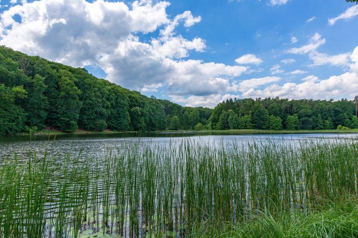 Der Naturpark Unteres Odertal in Brandenburg schützt eine Flussaue.