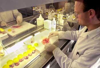 """Wachstumsbranche Biotech: """"Typischerweise Anlaufverluste"""""""