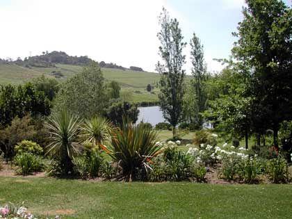 Weinanbau in idyllischer Landschaft: Weinbaugebiet bei Paarl