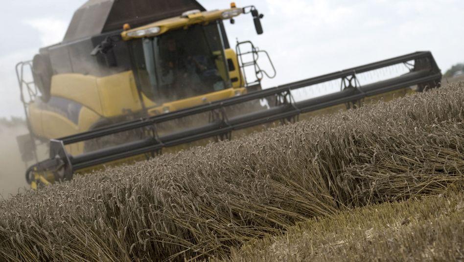 Weizenernste in Sachsen-Anhalt: Rohstoff-ETFs finden zurzeit wenig Anhänger