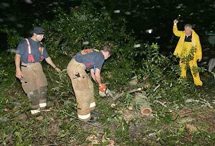 In der gesamten Region wurden Tausende Bäume entwurzelt