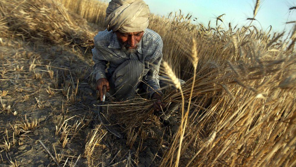 Weizen, Mais, Hafer: Dramatische Preissprünge bei Agrargütern