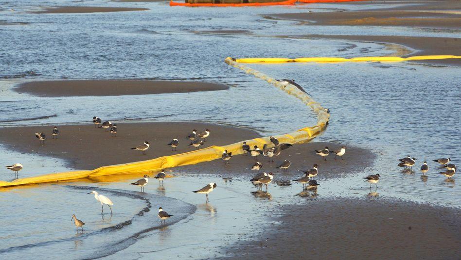 Bekämpfung der Ölpest vorerst gestoppt: Wirbelsturm bedroht Helfer