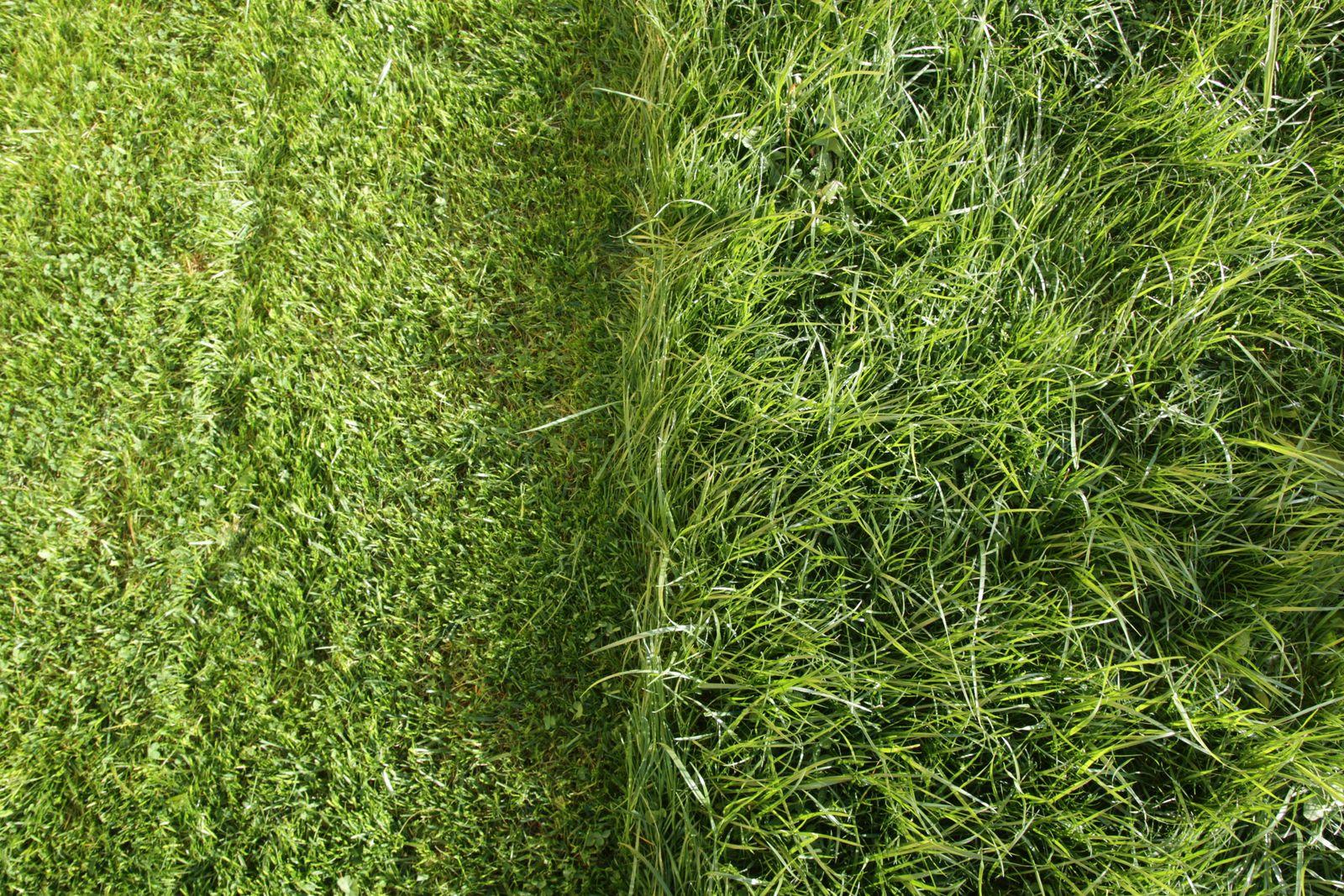 partially cut grass lawn
