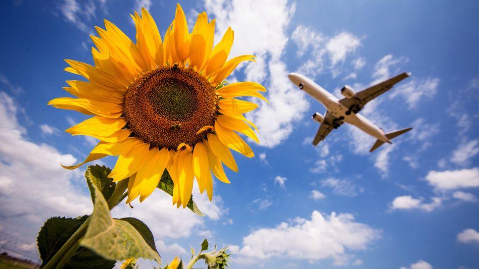 Fliegen soll nach dem Willen der Bundesregierung teurer werden; dadurch sollen die CO2-Emmissionen in Deutschland gesenkt werden