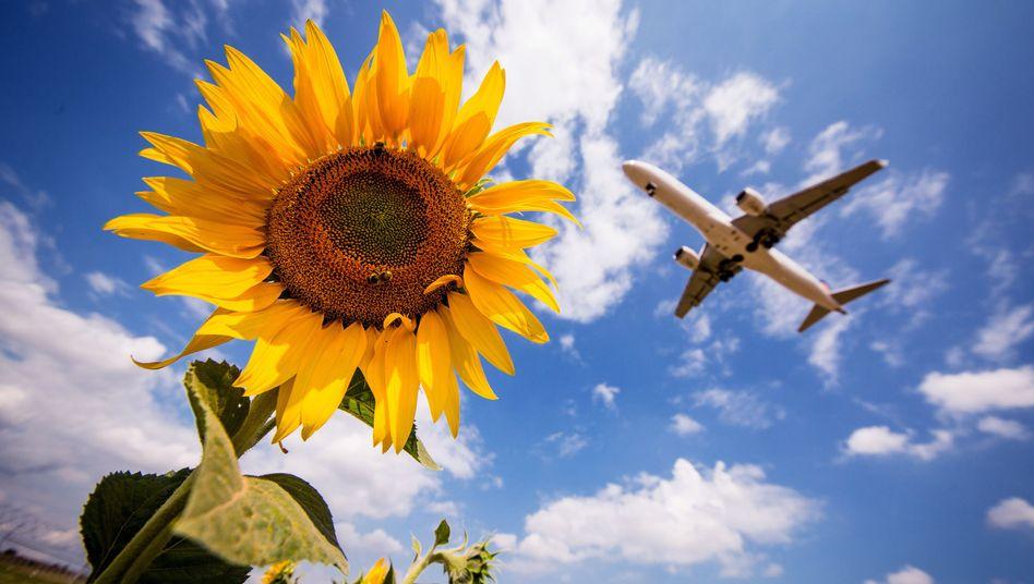 Flugzeug über Sonnenblumen: Kurze Flüge dürften für mehr Klimaschutz nun teuer werden