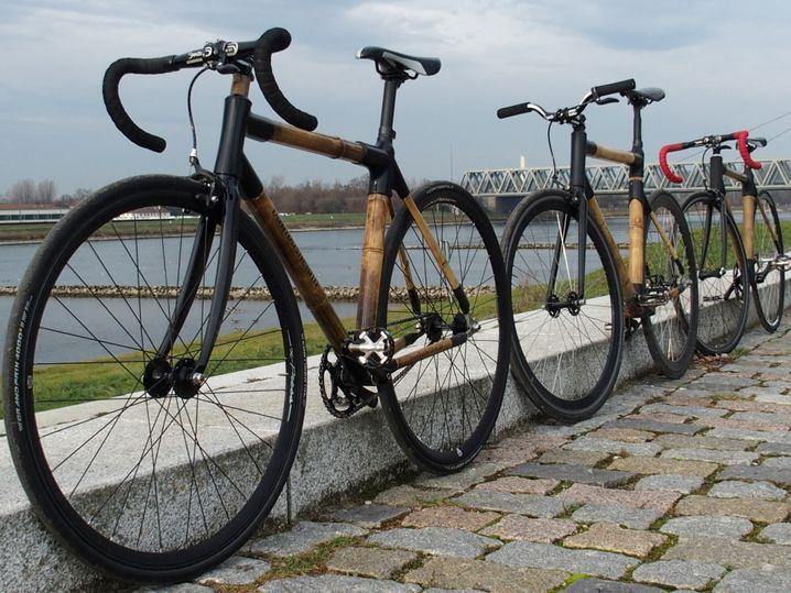 Bambushelden: Der Rohstoff für diese Räder wird in Karlsruhe geernet