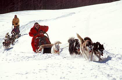 Auf den Hund gekommen:Mit vier bis fünf «Hundestärken» über Land - gesteuert wird der Schlitten, indem der Fahrer sein Gewicht verlagert