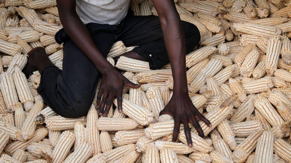 InBev-Tochter Nile Breweries nutze ihre Position als großer Abnehmer, um den Maisanbau in Uganda zu revolutionieren. Die dort ansässigen Kleinbauern konnten ihr Einkommen mehr als verdoppeln.
