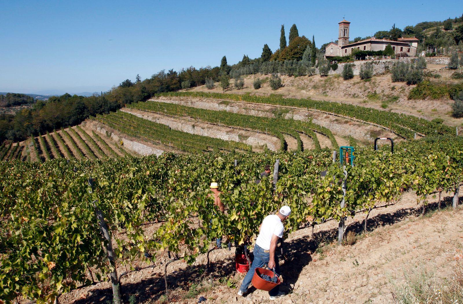 Italien / Toskana / Wein / Weinlese / Weinberg / Chianti