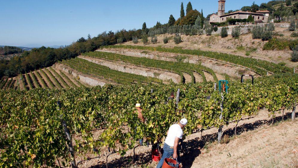 Feintrinker-Tipp: Zwölf besondere Weine aus der Toskana