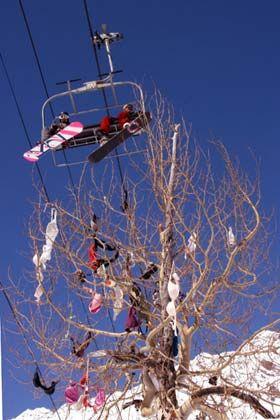 Unkonventioneller Baumschmuck: BHs an den Bäumen - und das im so strengen Utah