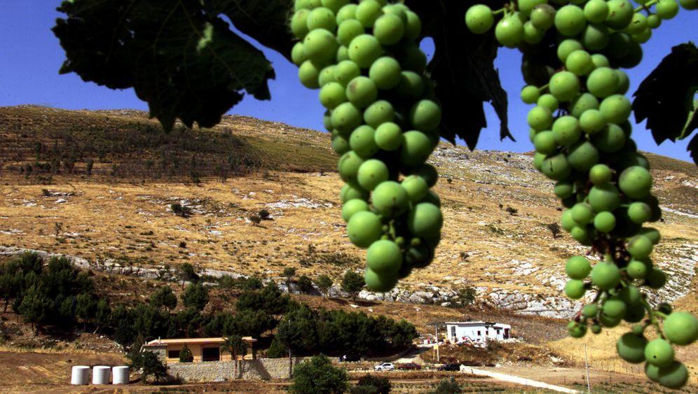 Wein-Tipp: Acht besondere Weine aus Sizilien