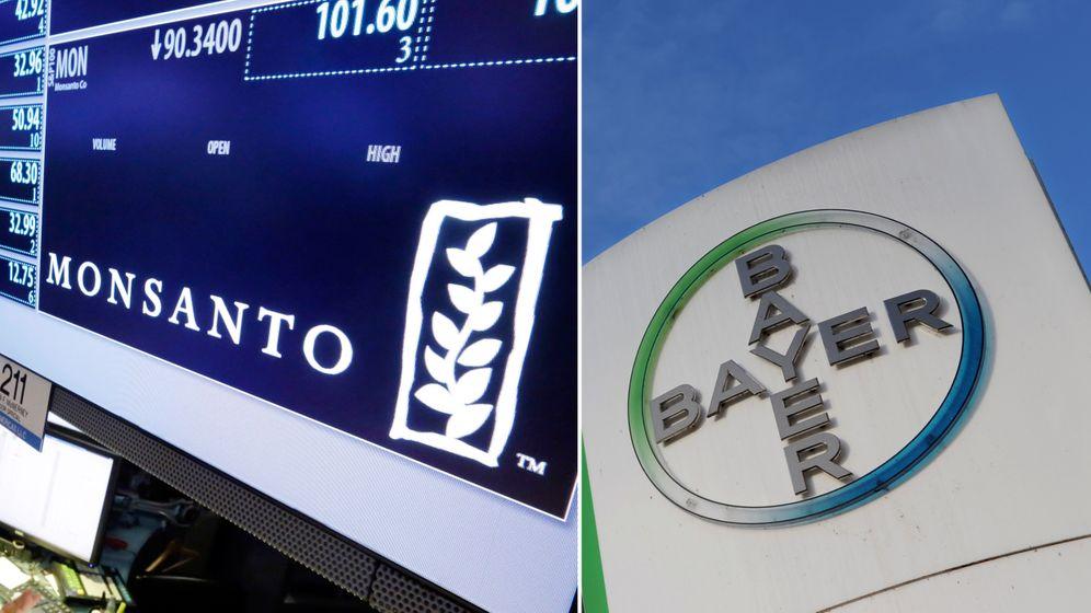 Gekaufte Größe: Wie sich Bayer und Monsanto ergänzen