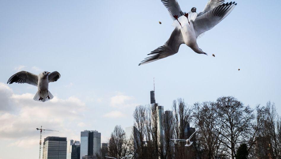 Möwen vor der Skyline von Frankfurt: Angesichts des Brexits wenden sich auch Investoren der Main-Metropole zu, die bislang vor allem in London Immobilien erworben haben.