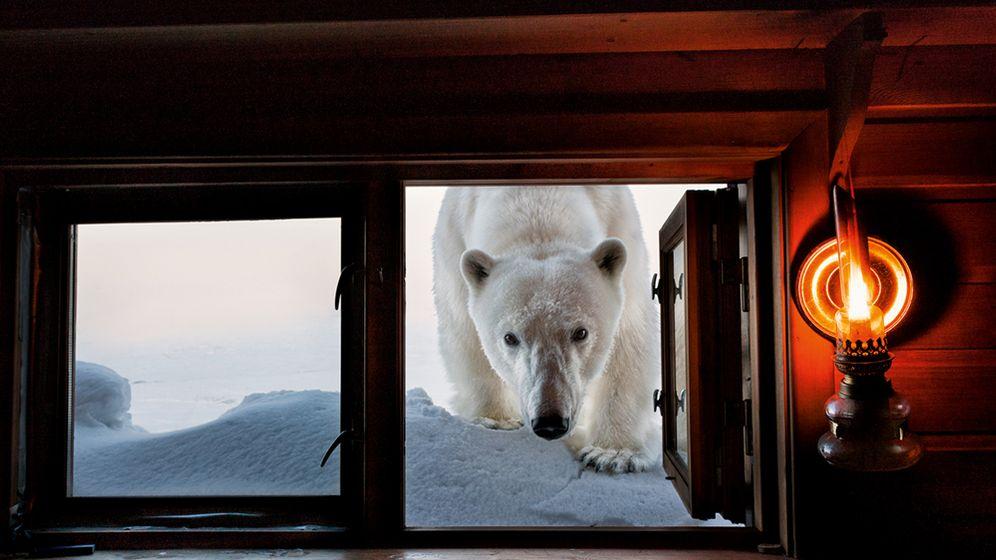 Ice, ice, baby: Spektakuläre Bilder aus dem Eismeer