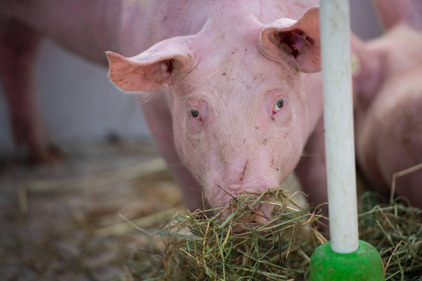 22.07.2020 - Demonstration von Tierschützern und Bauern am Tönnies Hauptwerk: Tierschützer des Tierschutzbüros protestie