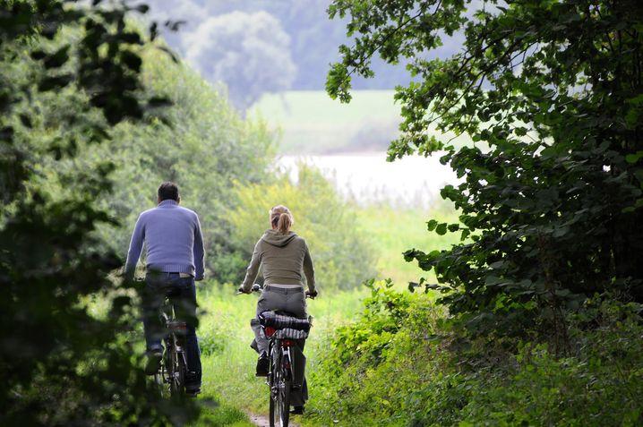 Lauschig grün: Der Elberadweg bei Lauenburg