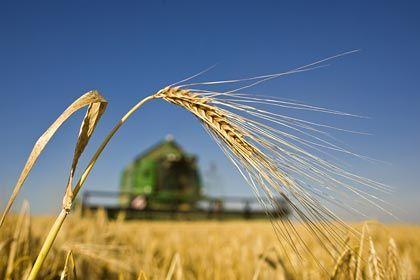 Wachstumsmarkt: K+S profitiert vom steigenden Bedarf an Agrarprodukten