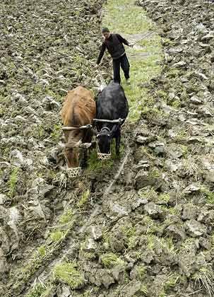 Arbeiter auf dem Land: Die hohe verdeckte Arbeitslosigkeit in den inneren Provinzen dürfte das Heer der Wanderarbeiter bald auf 300 Millionen anschwellen lassen