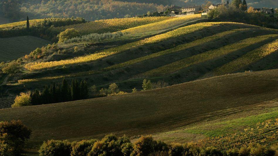Liebliche Landschaft, großartige Weine: Die Toskana