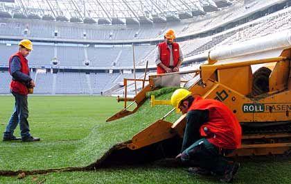 Bald wird er heilig sein: Arbeiter beim Verlegen der letzten Meter des Rasens auf dem Spielfeld