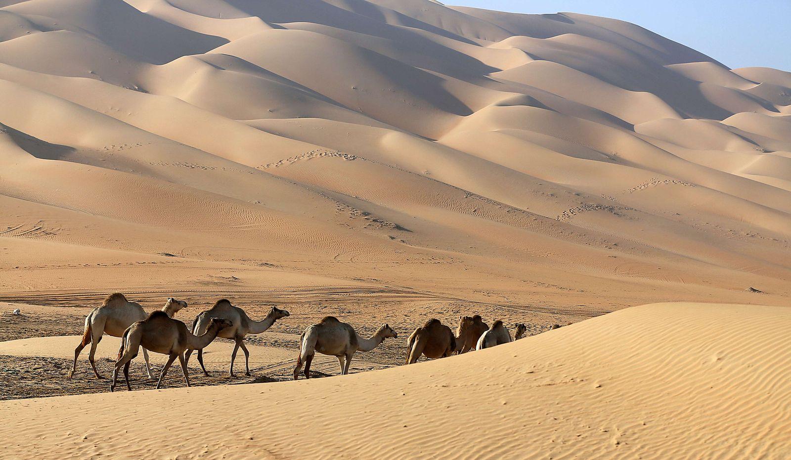 Kamele / Würste / Sand
