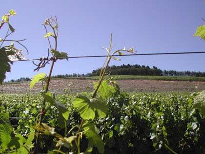 Fast 4000 verschiedene Weine vom Kap: Weinbaugebiet bei Franschhoek