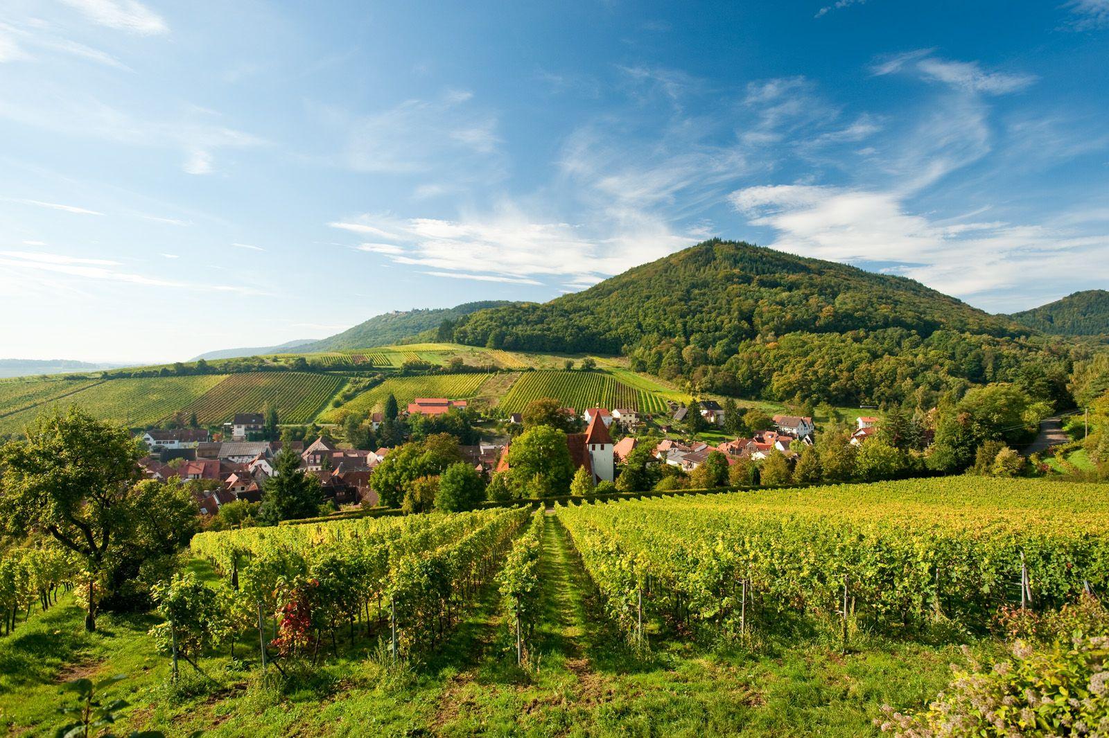 Blick über die Weinlandschaft auf Leinsweiler