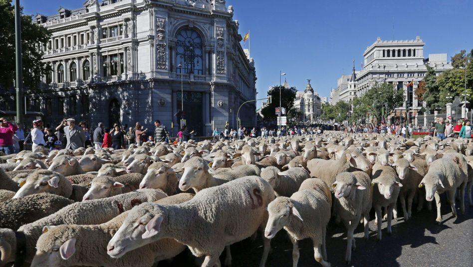 Cultural Fit im Tierreich: Zu Schafen passen am besten Schafe. Irgendwann wird es dann aber auch langweilig
