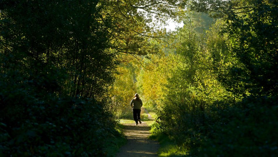 Wald: Zum Joggen gut, aber zur Geldanlage?