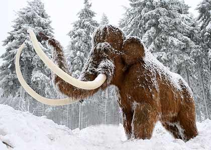 Endlich rehabilitiert: Das Mammut ist doch nicht Schuld an den kleinen und großen Unterschieden zwischen Mann und Frau