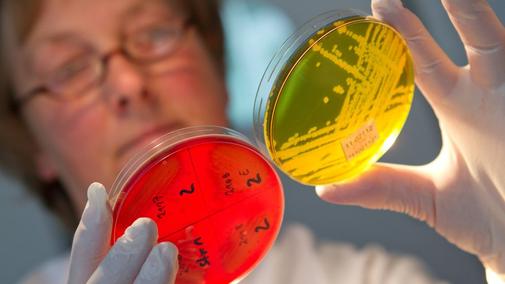 Ehec-Bakterien: Mediziner testen experimentelle Therapie