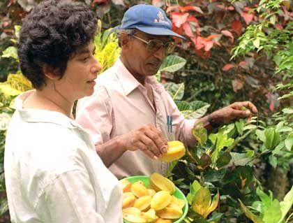Steuern auf Jamaika: That's Kirchhof, man!