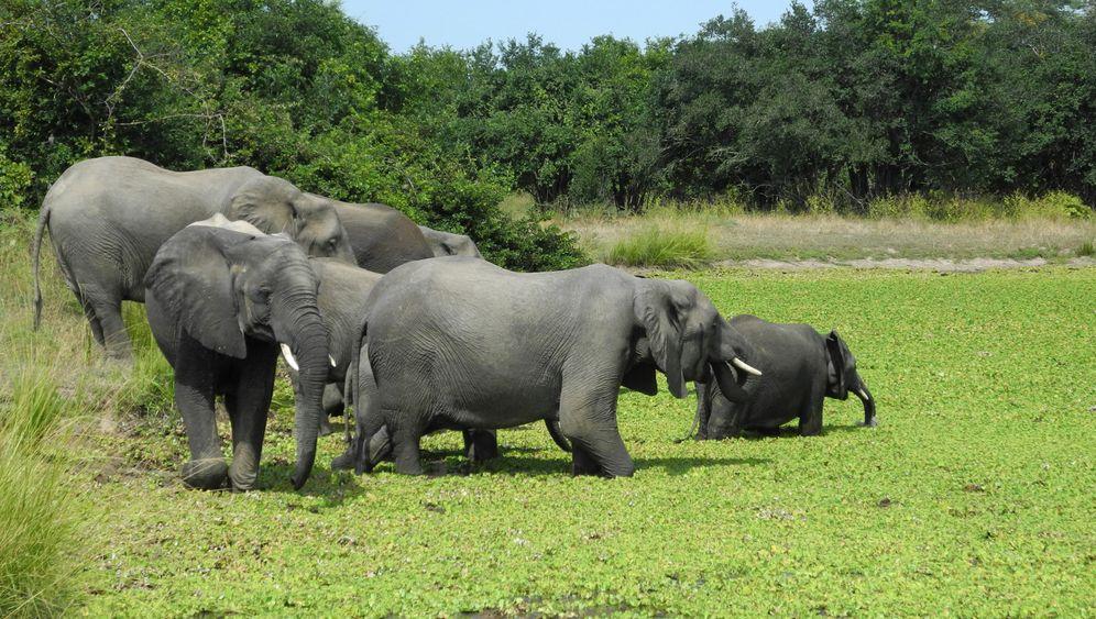 Auf Safari in Sambia: Wo Nilpferde und Elefanten baden