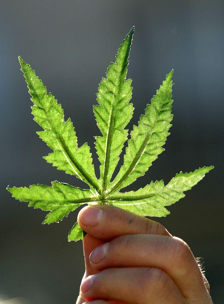 Cannabis-Blatt: Eine Branche zwischen Hoffnung und Hype