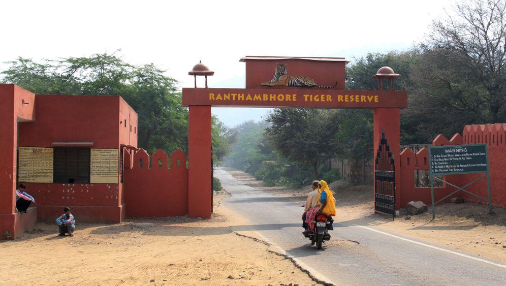 Safari im Ranthambhore Nationalpark: Den Tiger im Blick