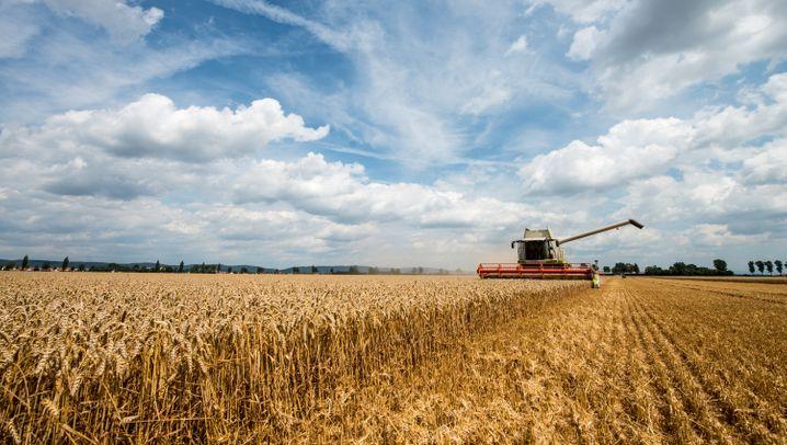 Ukraine-Krise: Diese Branchen ächzen unter den Sanktionen gegen Russland