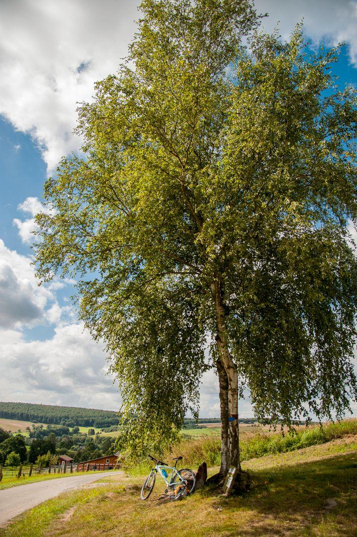 Natururlaub in Deutschland - das ist zum Beispiel auch im Naturpark Solling-Vogler in Niedersachsen möglich.