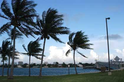 Vorboten der Katastrophe: Palmen am Strand von Miami biegen sich unter der Windlast