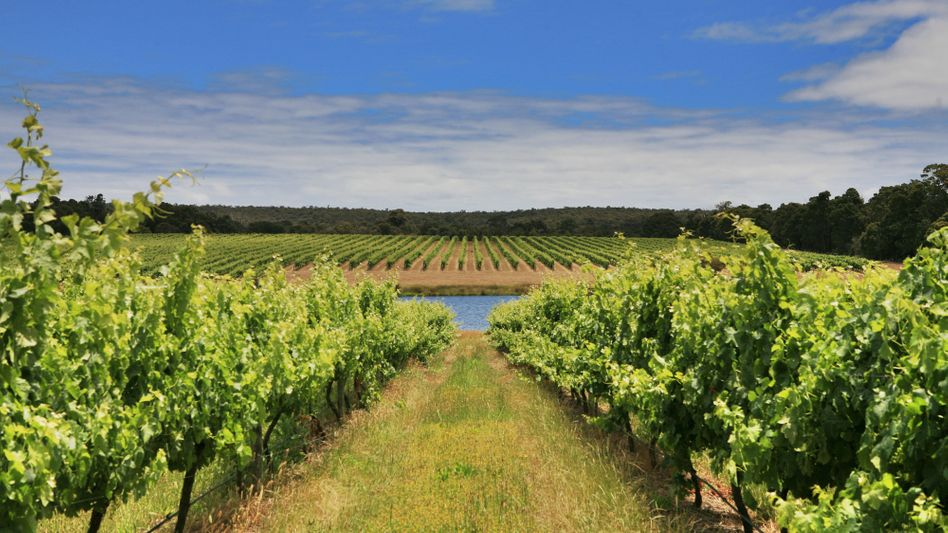 Im Blick der Investoren: Weinbau in Australien (Symbolbild des Barwick Estate in der Margaret-River-Weinregion)