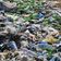 Deutschland exportiert deutlich weniger Plastikmüll