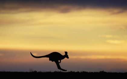 Riesensätze: Australiens Kängurus sind zu großen Sprüngen fähig, Australiens Notbank bevorzugt bei den Leitzinsen eher kleinere Schritte, ist den anderen Notenbanken aber damit weit enteilt