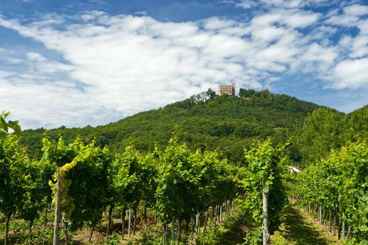 Auch an einem Weinabend darf gelacht werden - und davon gibt es entlang der Weinstraße viele. Rund um das Hambacher Schloß wächst der Wein besonders dekorativ.